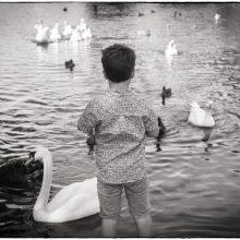 portrait photograph of a boy feeding the ducks