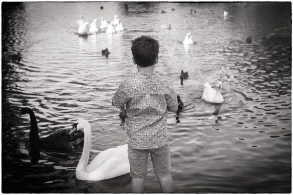 portrait photograph of a boy feeding the ducks